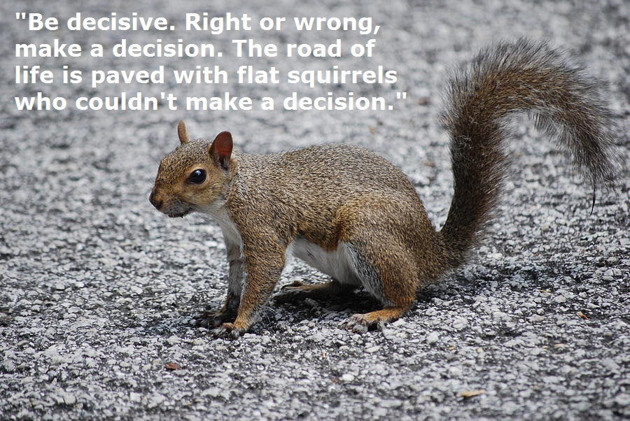 squirrel-on-a-road-text